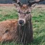 deer_03